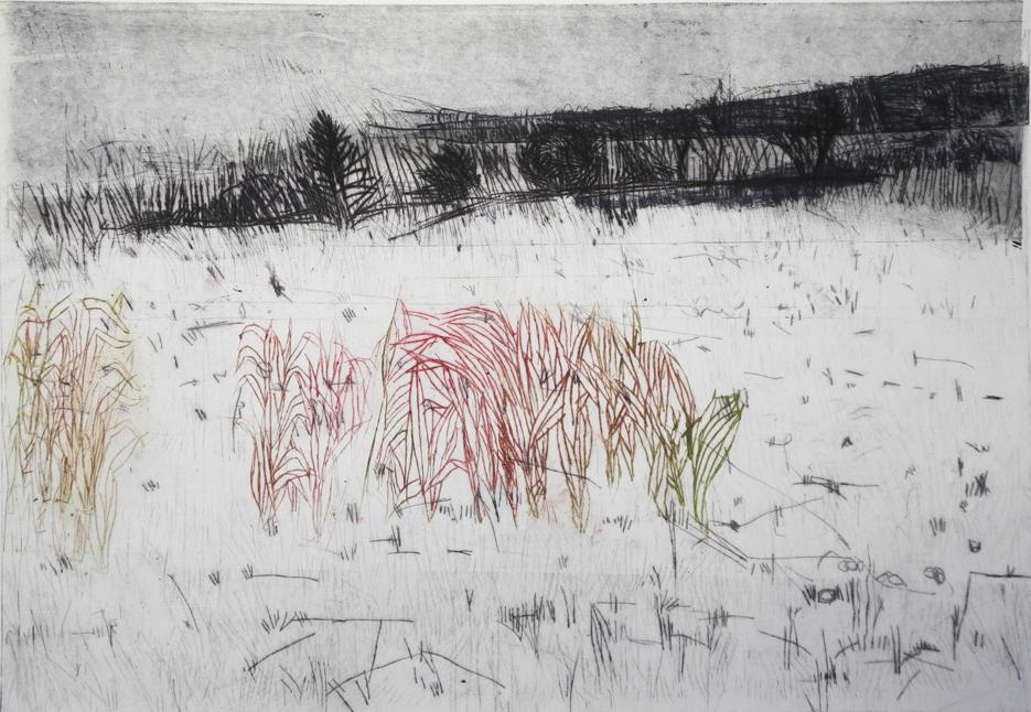 Winter grass, drypoint, 27 x 18″, 2017
